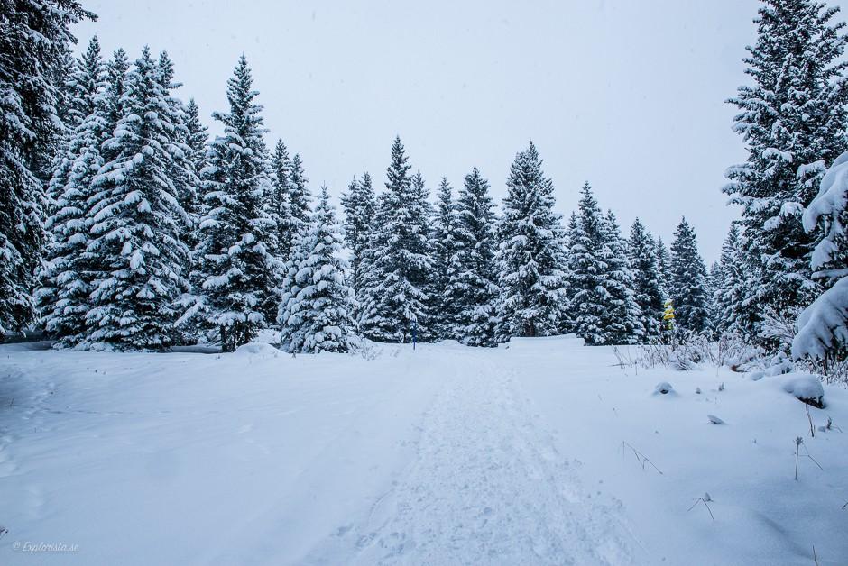 snöig vit skog