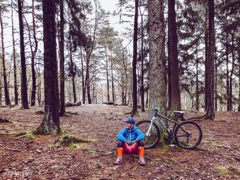 mountainbike i tallskog