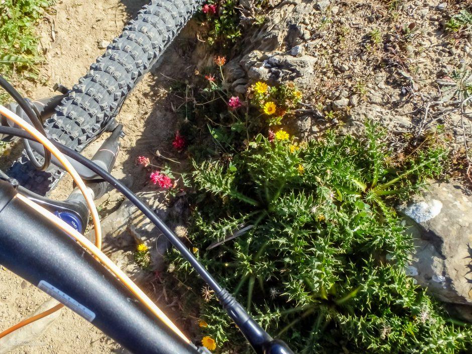 mountainbike hjul växter spanien