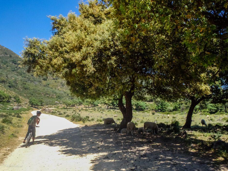 mountainbike träd får