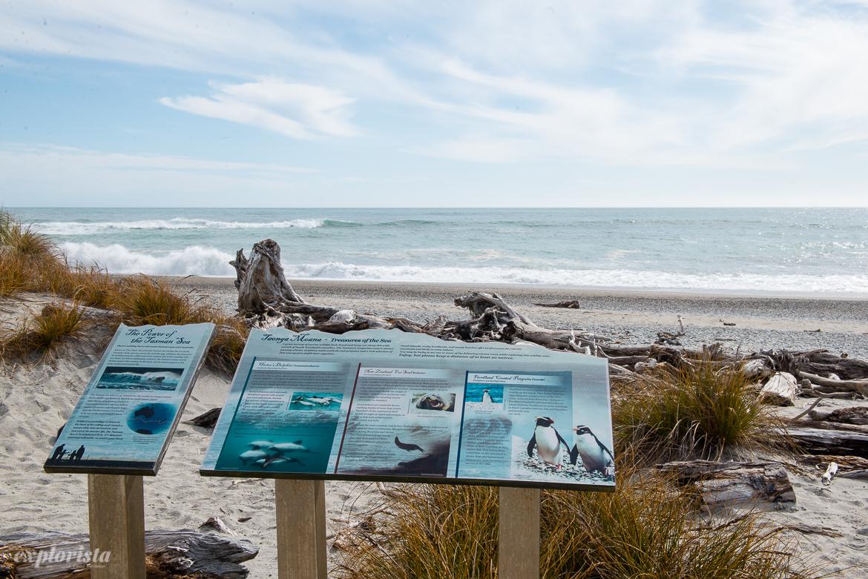 skylt vid strand om pingviner i nz