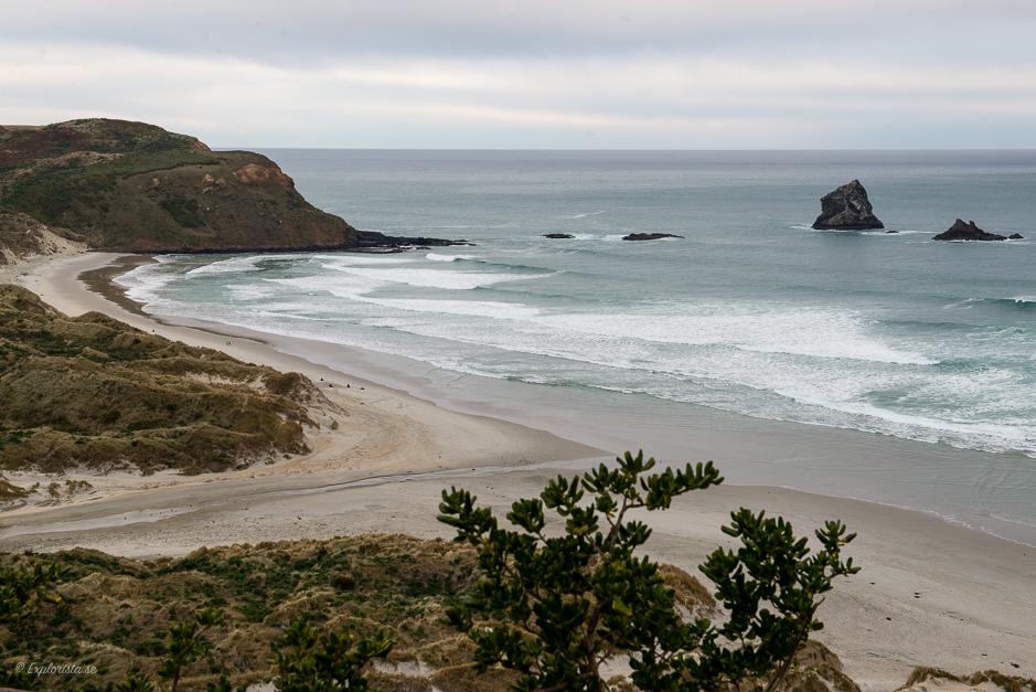 strand nya zeeland sjölejon