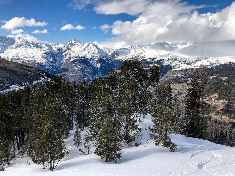 les arcs berg och skog