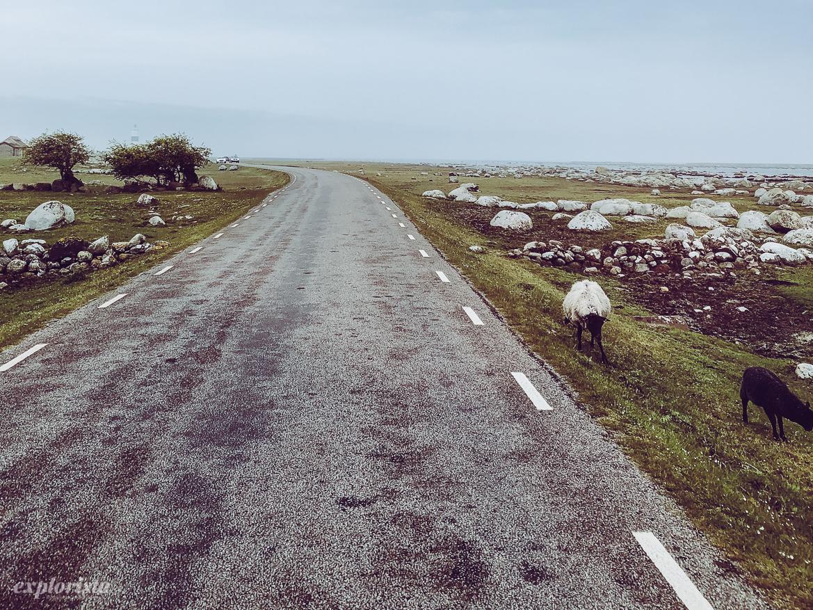 ölands södra udde väg med får