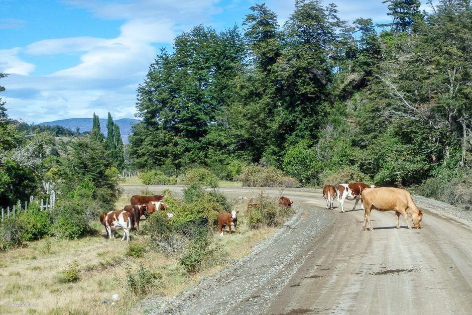 kor på vägen patagonien