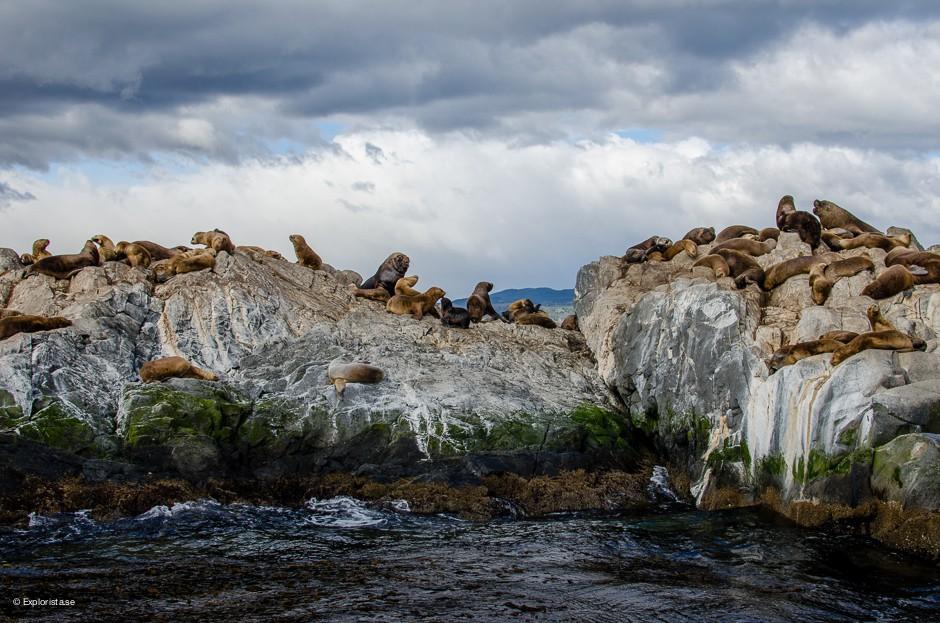 sjölejon ushuaia