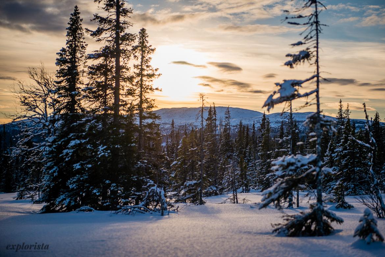 motljus vinter granar och snö