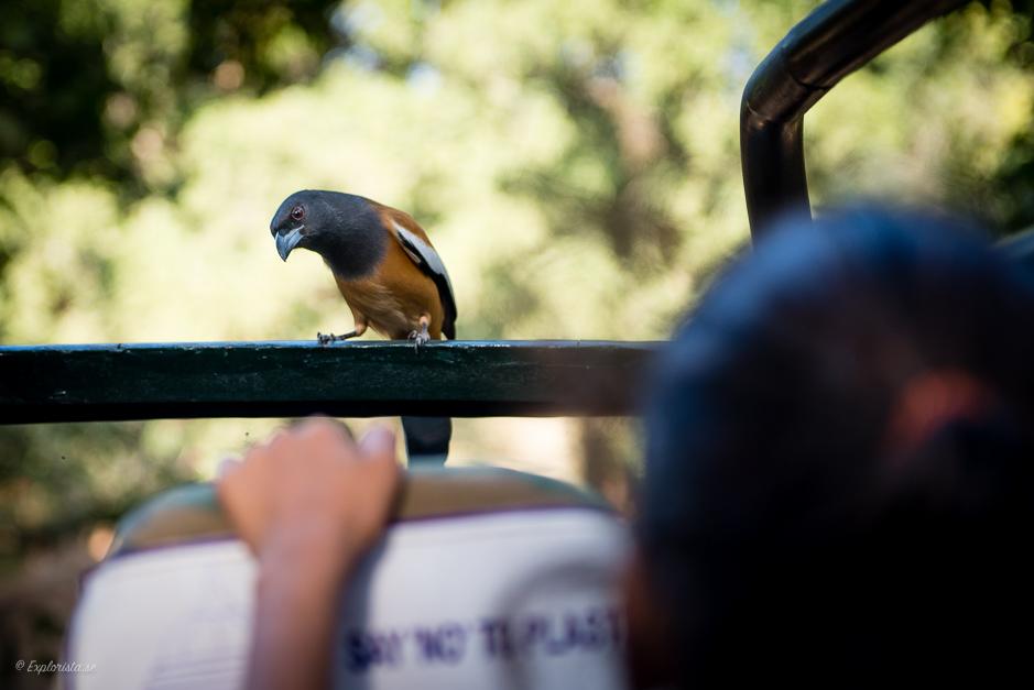 nyfiken fågel