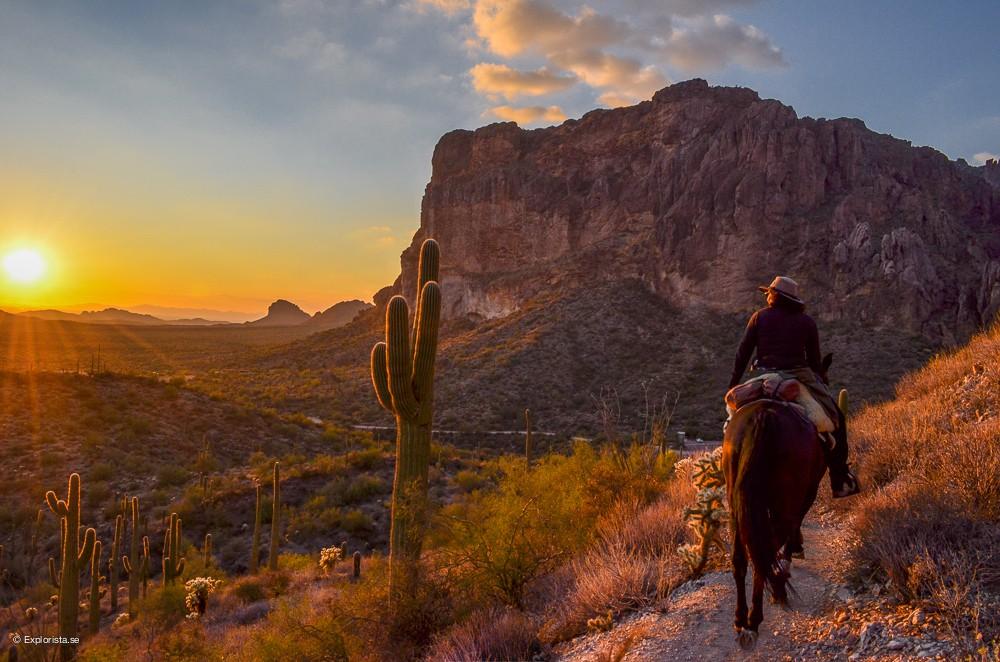 arizona solnedgång häst