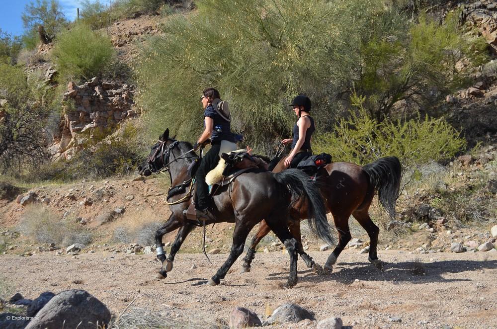 galopp hästar