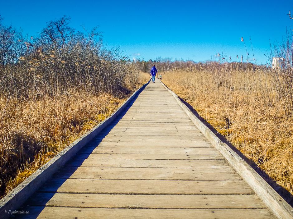 promenad runt rocksjön