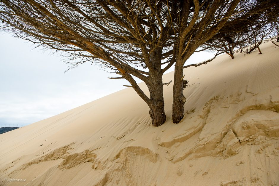 trädstam i sand