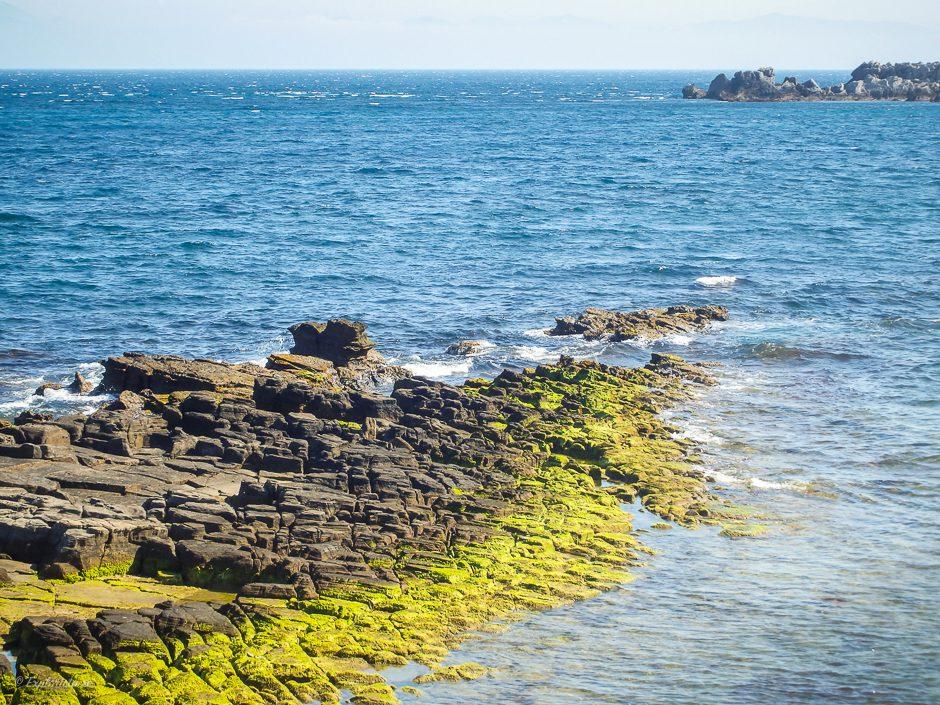 alger på sten