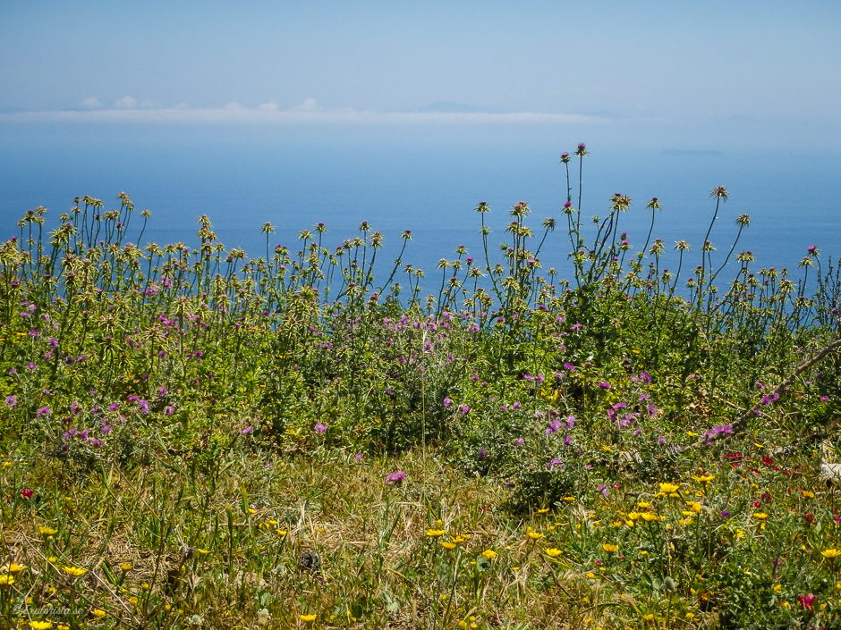 blommor utsikt över havet