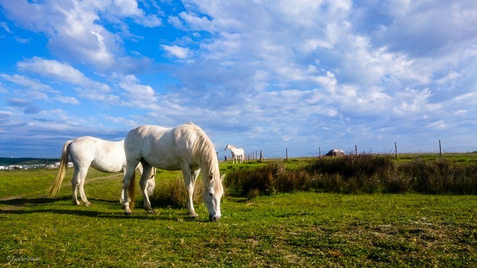 häst löparspår