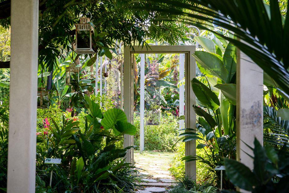trädgård i singapore