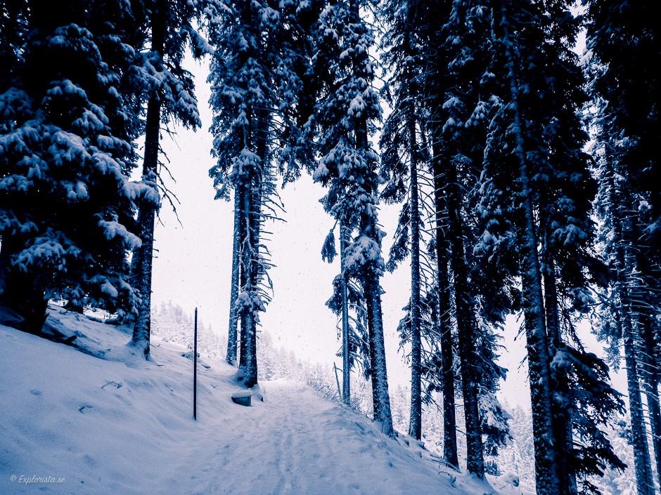 skog snö