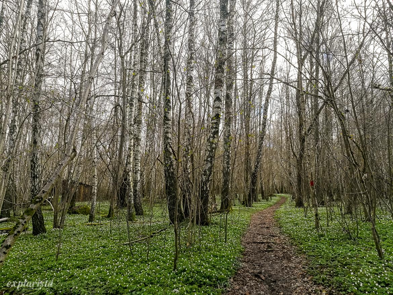 vitsippshav strömsbergsskogen