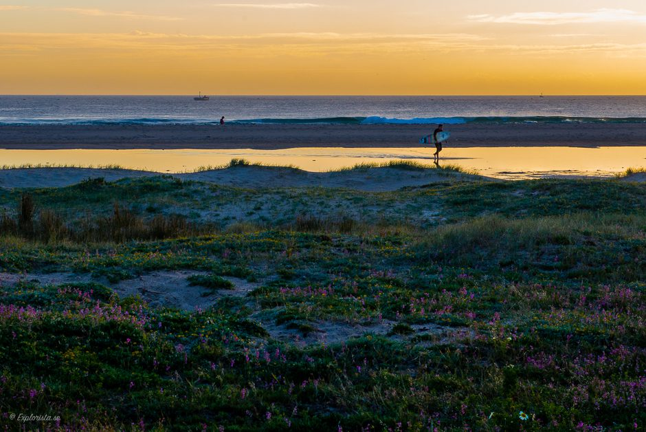 surfer sunset beach