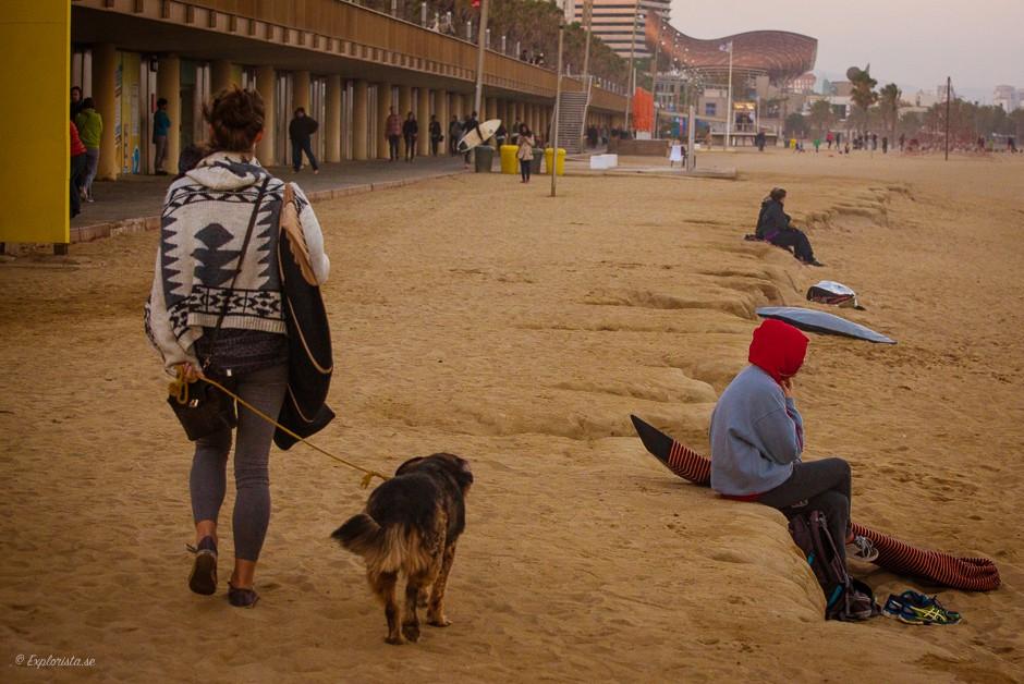 tjej surfbräda strand hund