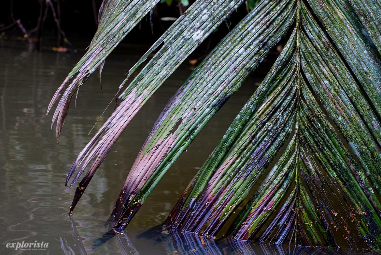 palmblad i vatten