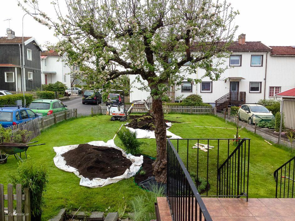 bygga ny trädgård uppgrävd jord
