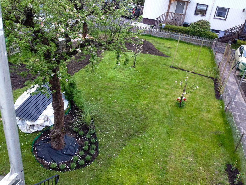 översikt nyplanterad trädgård