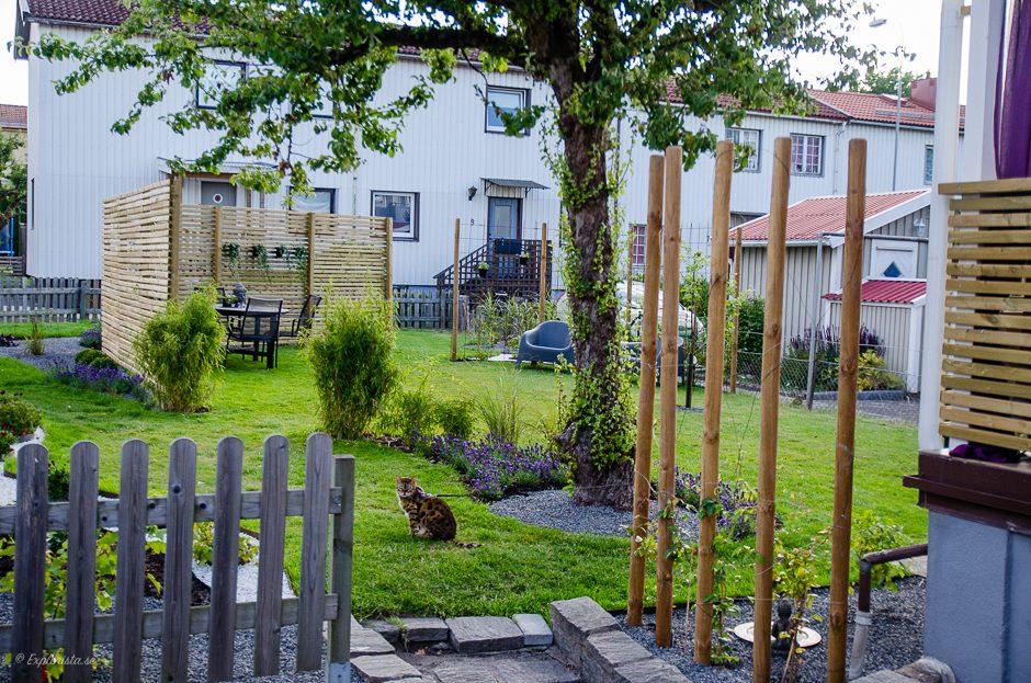 trädgård efterbild