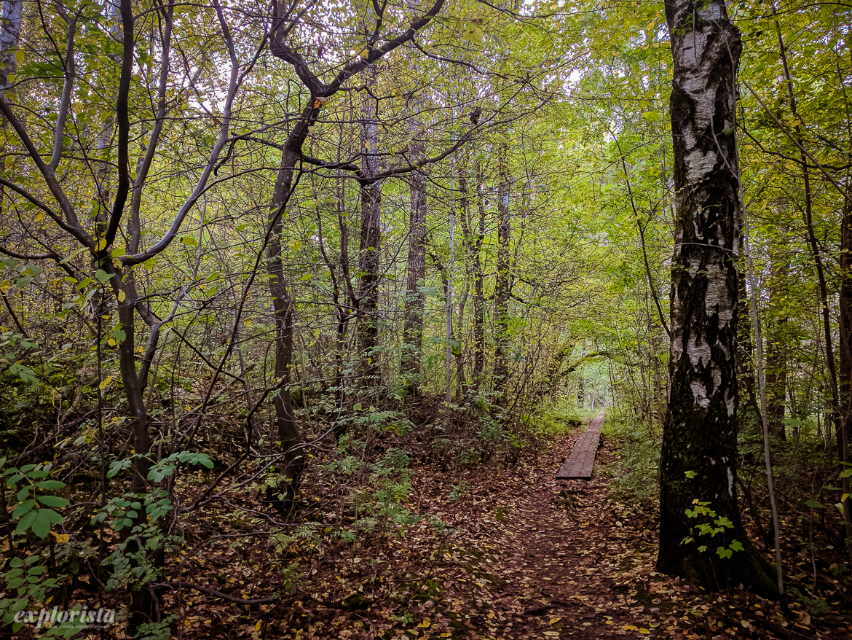 trailrunning skatås