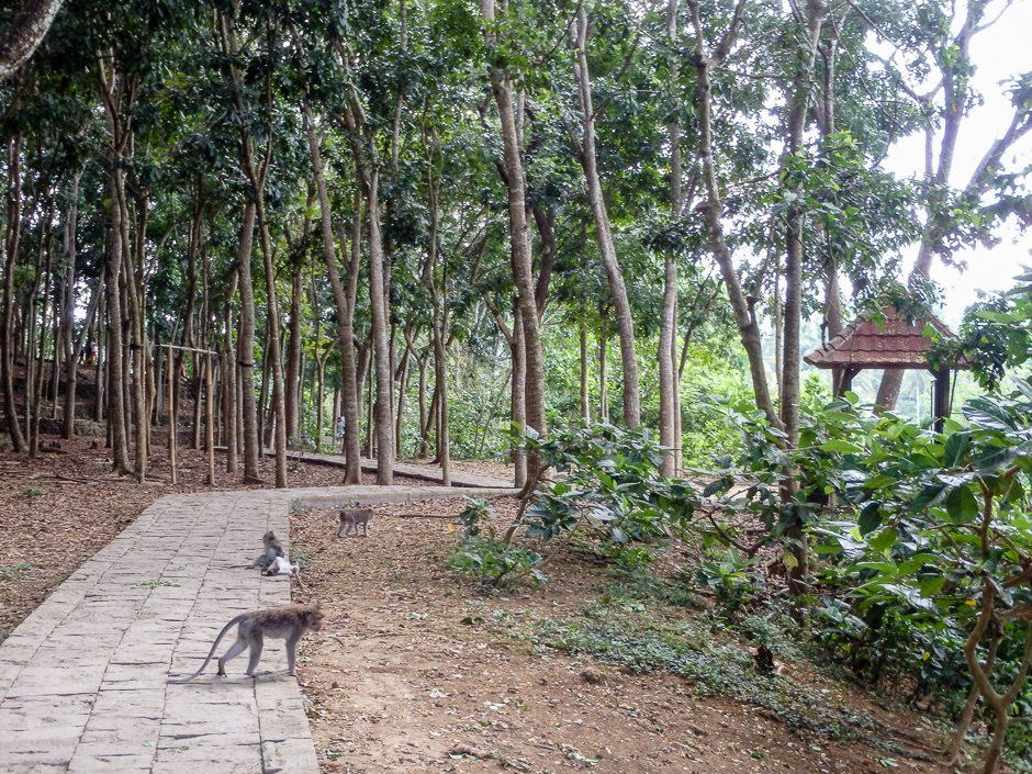 apor i skog