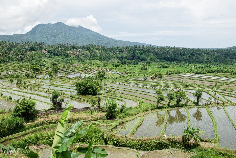 risfältsterasser på bali
