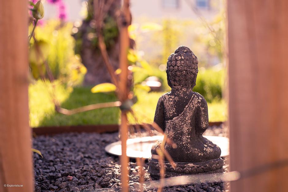 buddha motsol