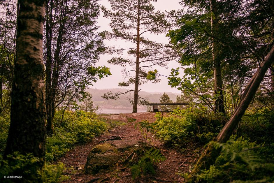 skog vann spa