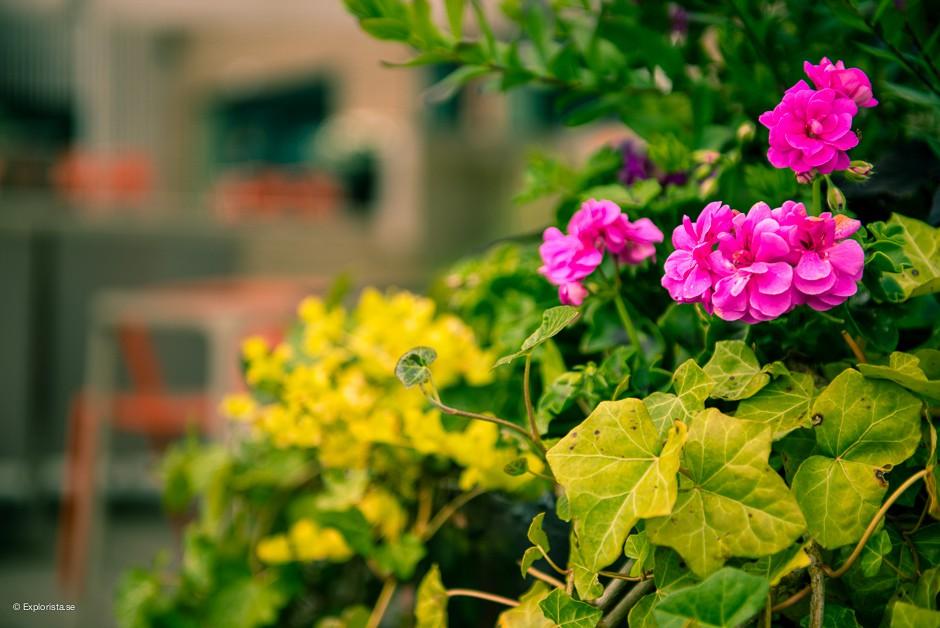 blommor vann spa