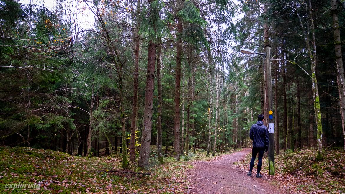 promenadslinga i skog