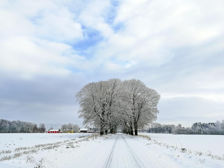 vacker allé snö