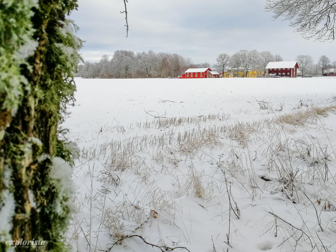 snöigt fält