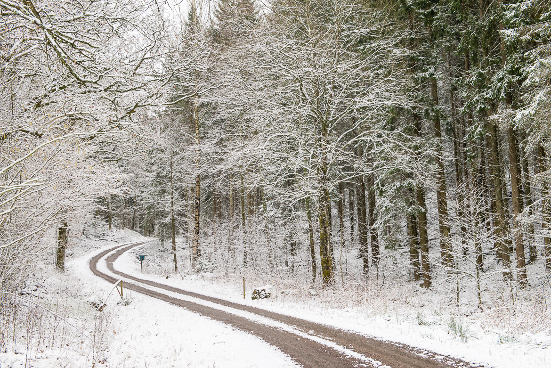 skogsväg snö