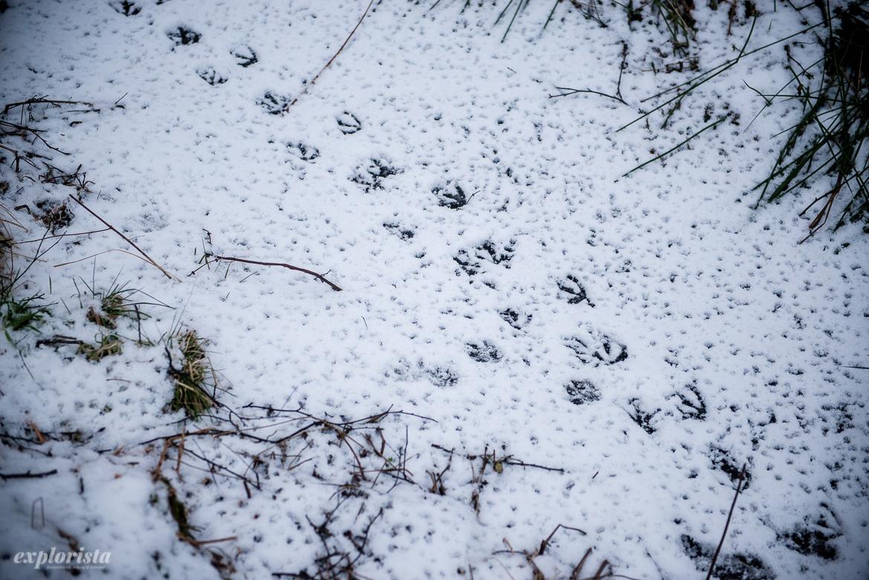 ankpromenadspår i snön