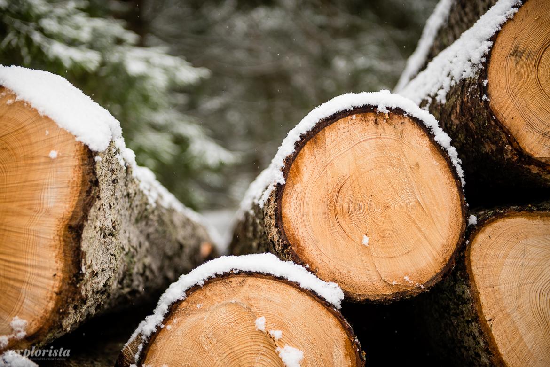 huggna träd snö