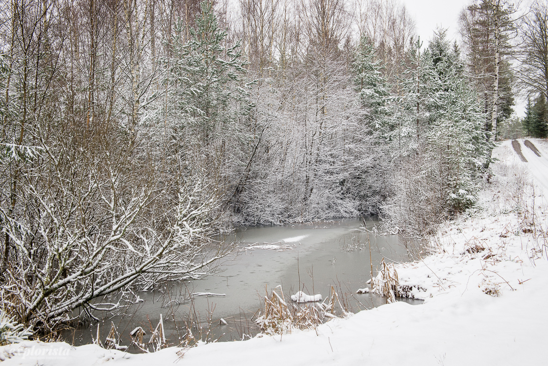 snöig skog och tjärn