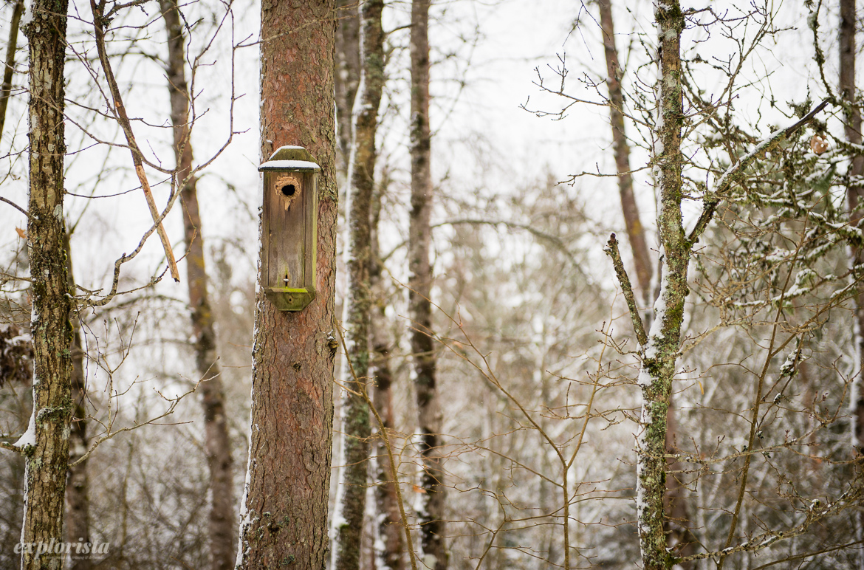 fågelholk på träd