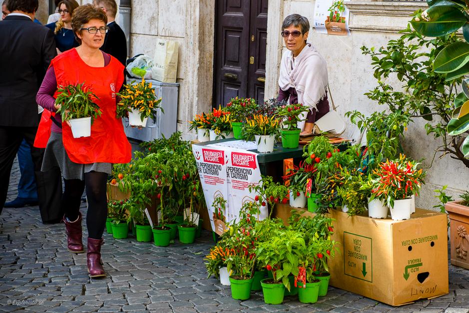 rom blommor gata