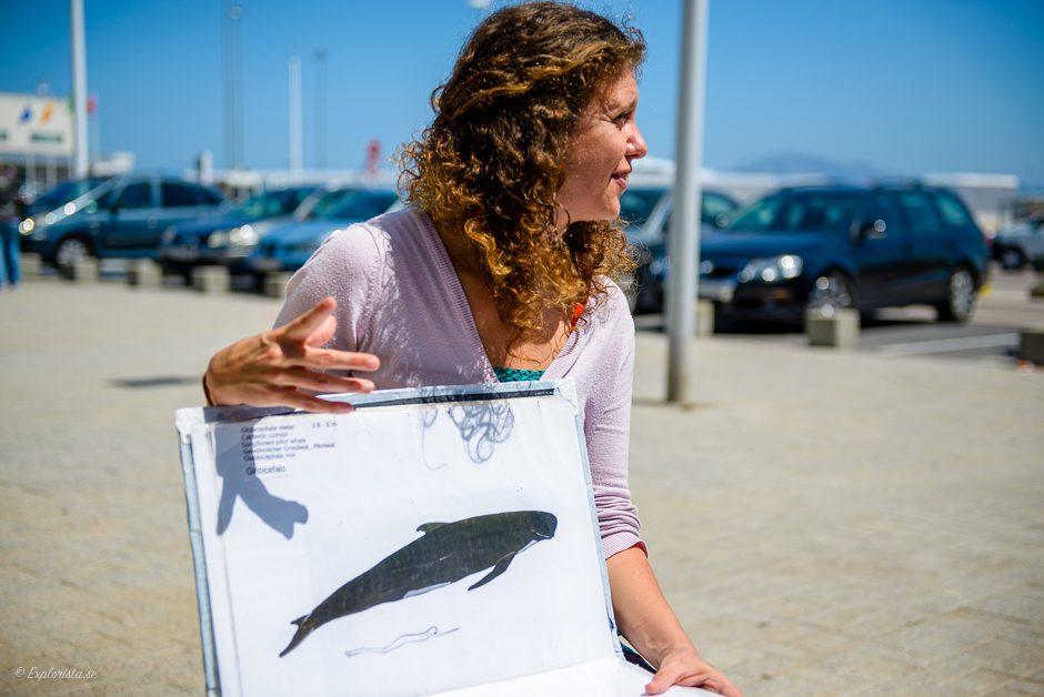 firmm whalewatching i tarifa