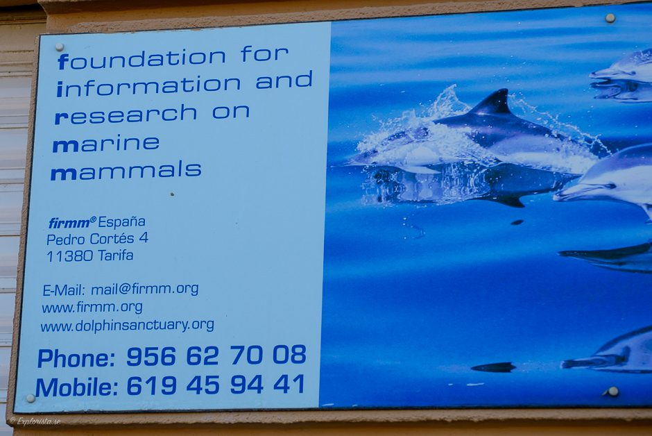 firmm whalewatching