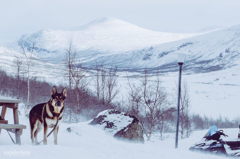 utsikt i fjällen vid Kebnekaise och schäferhund