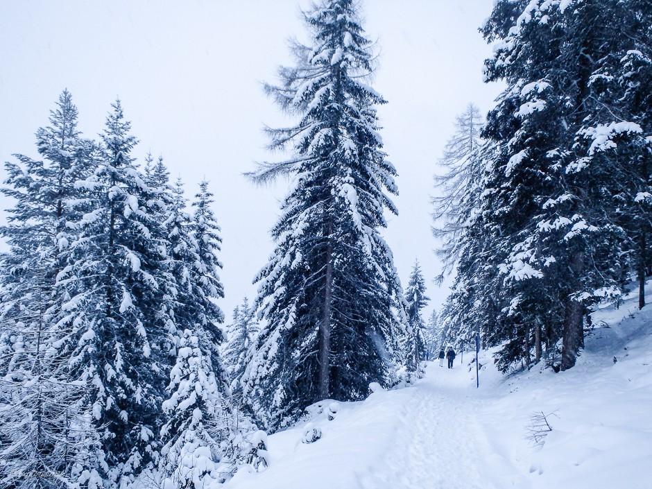 vintervandring snö träd