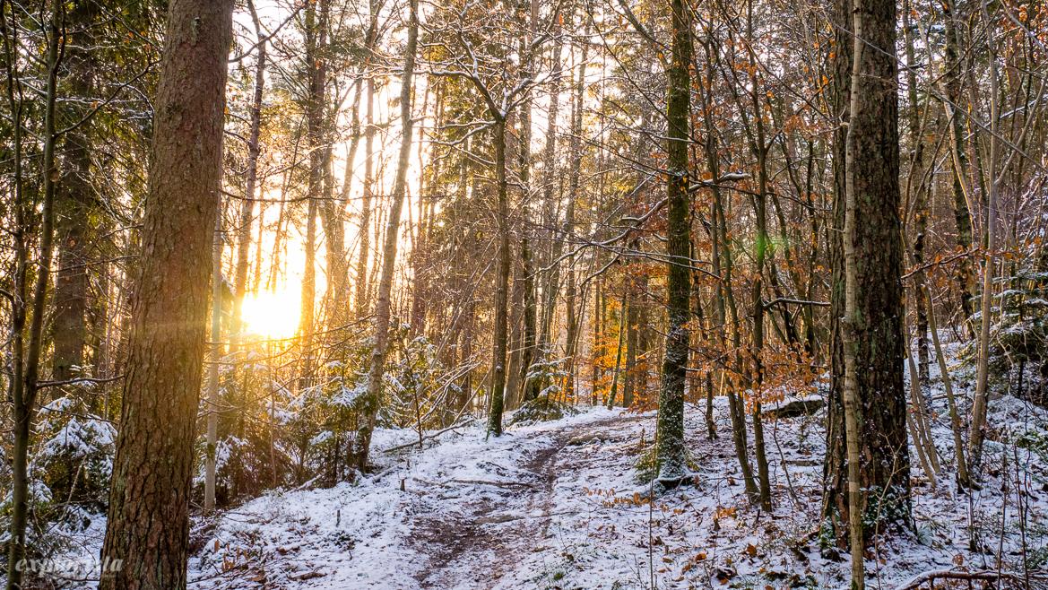 trailrunning vinter sol