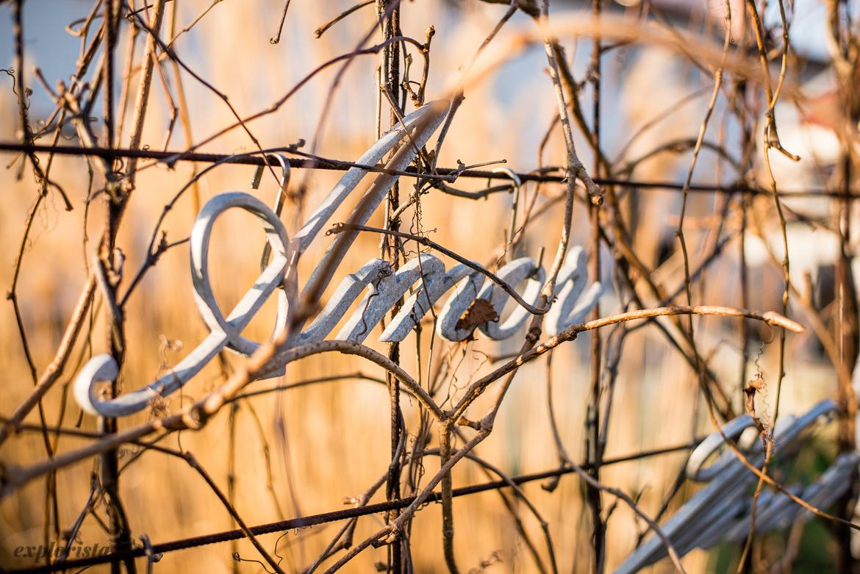 "Skylt ""amor"" i trädgården"