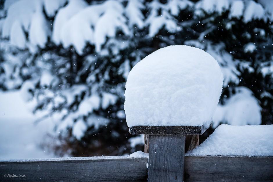 snö vinterpromenad